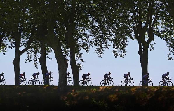 Picture trees, silhouette, Cycling, 2016, The tour de France, race