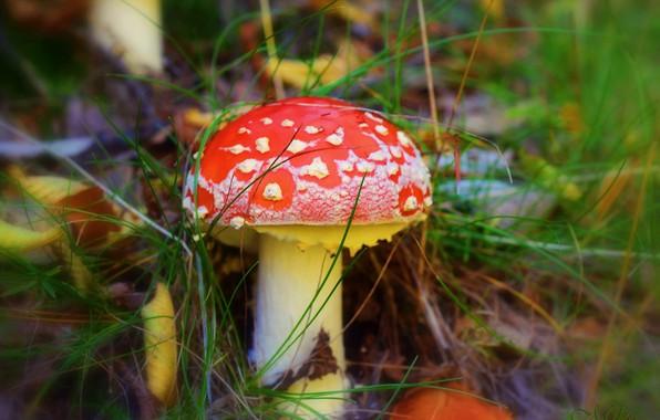Picture Macro, Drops, Mushroom, Macro, Drops, Mushroom