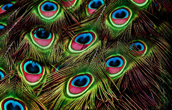 Picture background, bird, pattern, feathers, peacock, bright