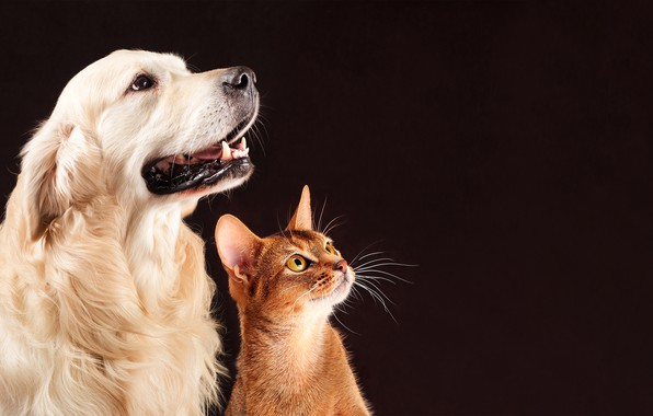 Picture cat, background, dog, friends, look, together