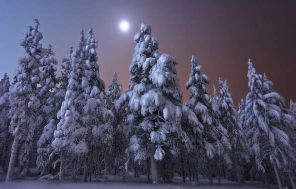 Picture winter, forest, snow, trees, landscape, night, nature, the moon, ate, Finland, Andrey Chabrov