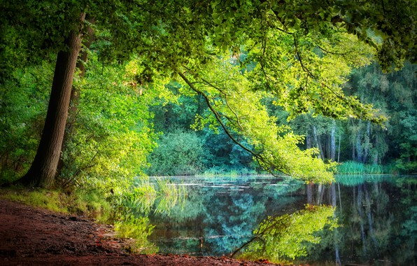 Picture summer, water, river, tree, crown