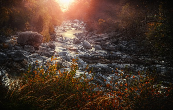 Picture light, nature, river