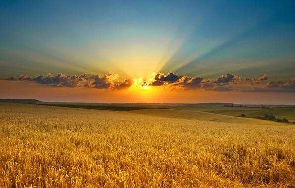 Picture sky, field, landscape, nature, Sunset, clouds, sun, horizon, sun rays