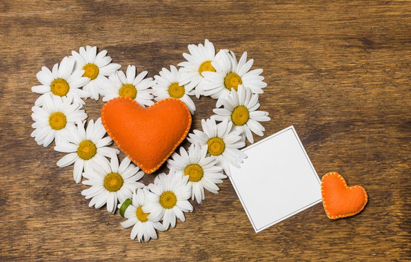 Picture love, flowers, heart, chamomile, love, heart, wood, flowers, romantic, camomile, floral