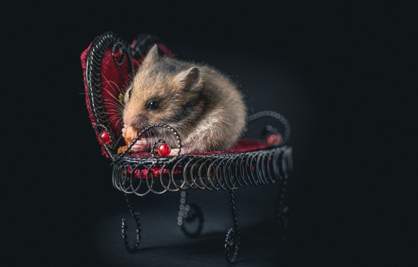 Picture chair, mouse, rodent