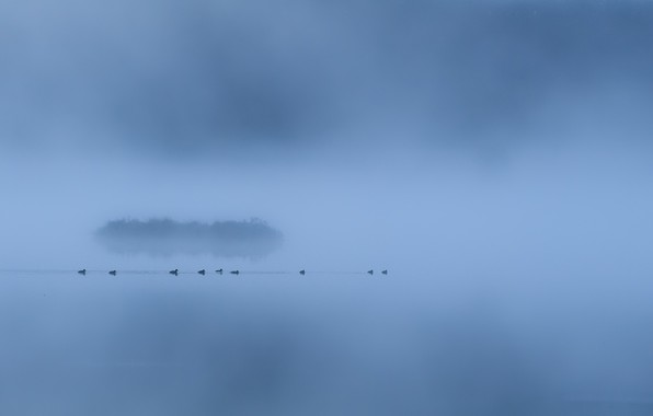 Picture fog, lake, duck