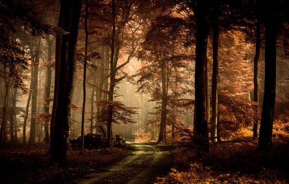 Picture road, autumn, forest, leaves, light, trees, branches, fog, trunks, foliage, beauty, track, silhouettes, path, misty