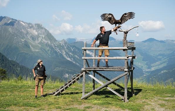 Picture woman, beautiful, man, eagle, Falconry