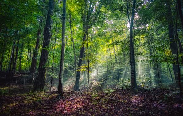Photo wallpaper greens, forest, the sun, trees, Park, USA, rays of light, Michigan, Leelanau