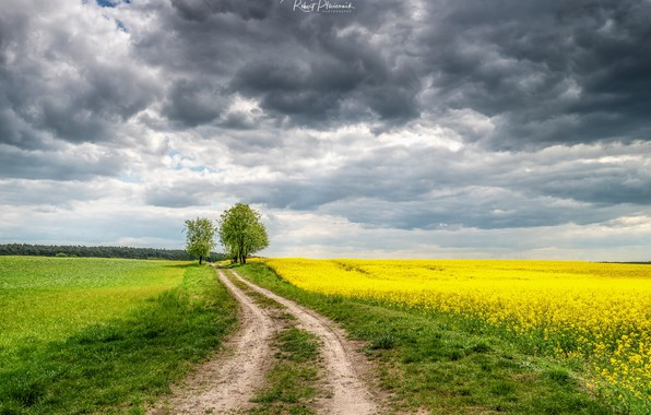 Picture road, field, the sky, clouds, flowers, Ptоciennik Robert