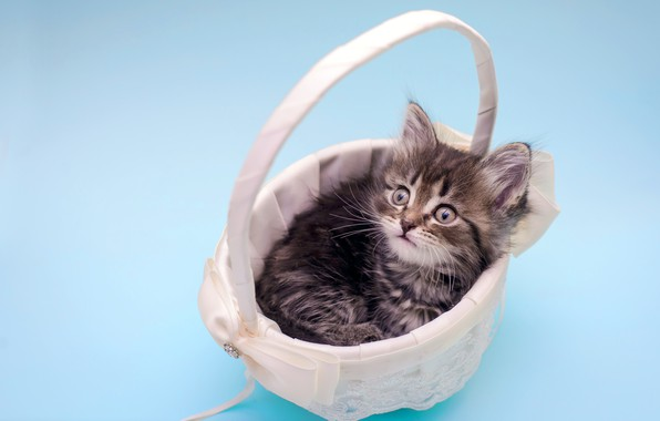 Picture look, kitty, fluffy, baby, basket