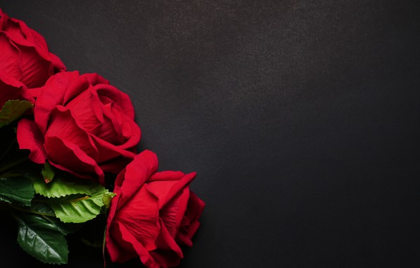 Picture flowers, roses, red, red, black background, flowers, roses