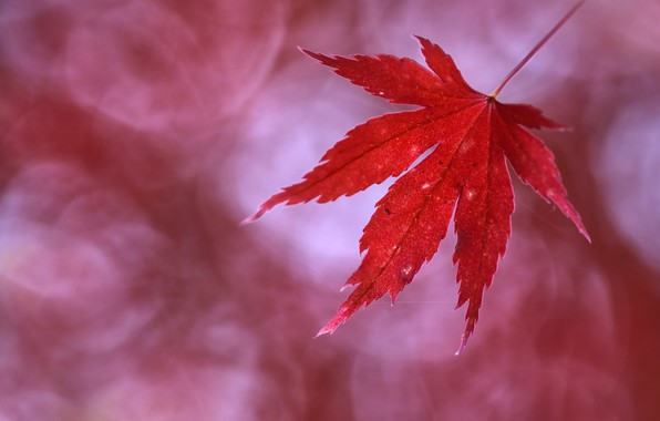 Picture autumn, sheet, autumn, leaf, Anna Zuidema