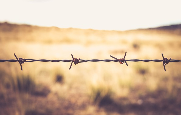 Picture macro, nature, spikes, barbed wire