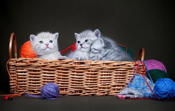 Picture basket, kittens, kids, thread, basket, trio, balls, the dark background, Trinity