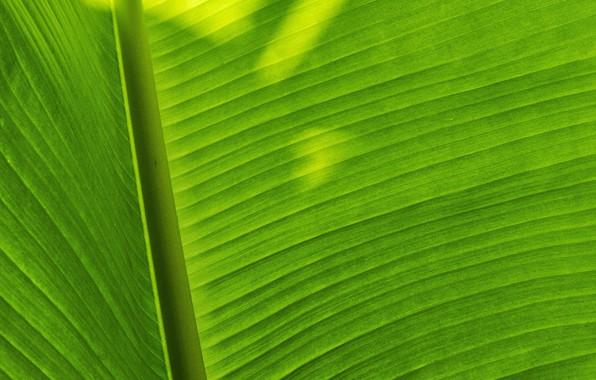 Picture macro, sheet, shadow, green