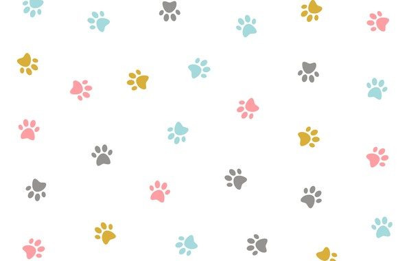 Picture texture, colorful, white background, design, kitten, pattern