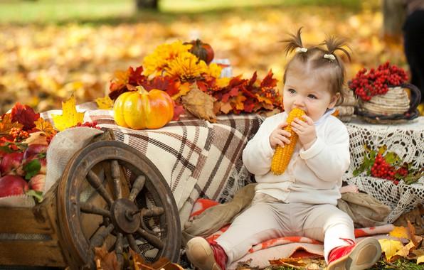 Picture autumn, Park, child, corn, girl, pumpkin