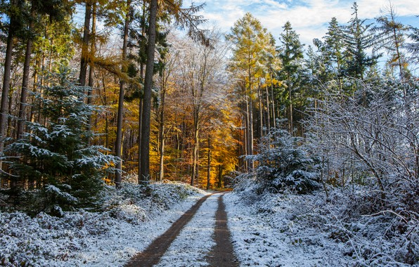 Picture winter, frost, road, autumn, forest, the sky, snow, trees, branches, nature, Park, trunks, yellow, ate, ...