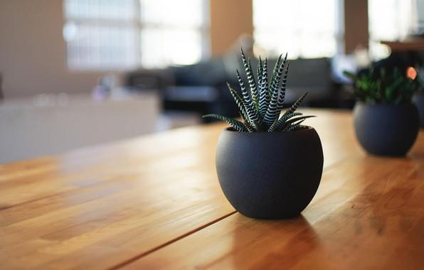 Picture table, pot, al