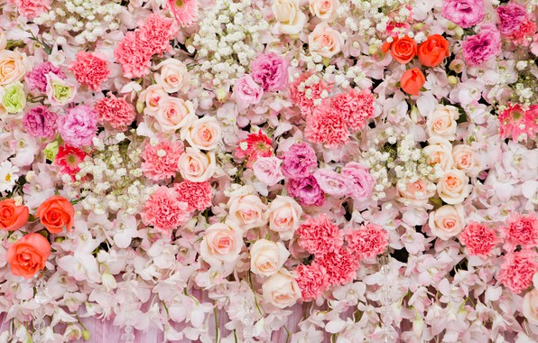Picture flowers, background, roses, colorful, pink, white, white, buds, pink, flowers, roses, bud