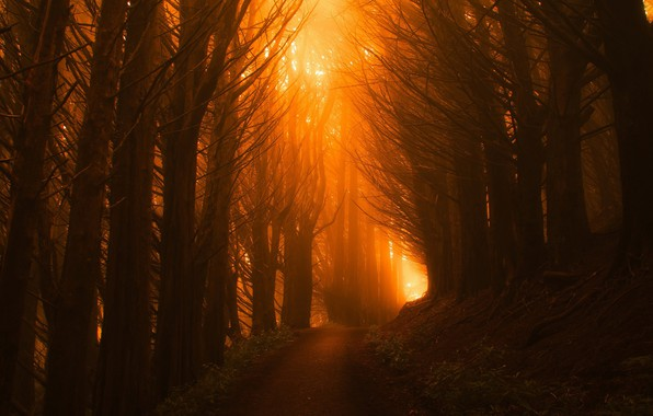 Picture forest, leaves, light, trees, orange, branches, fog, trunks, plants, alley, path, valuing