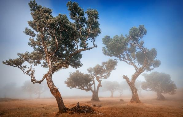 Picture trees, fog, trees, fog, Adrian Popan