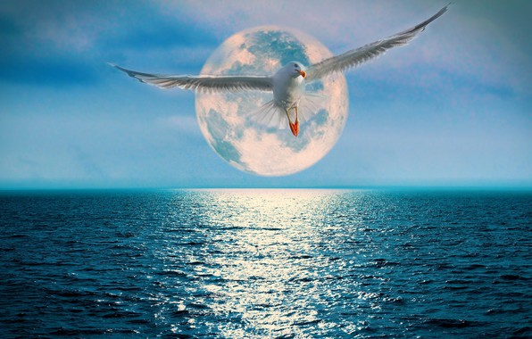 Picture the ocean, the moon, Seagull, track