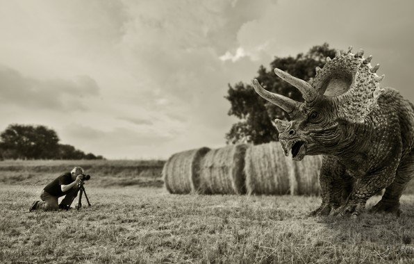 Picture dinosaur, the situation, photographer