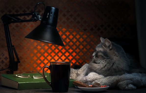 Picture cat, light, pose, comfort, house, the dark background, table, grey, background, room, stay, tea, lamp, …
