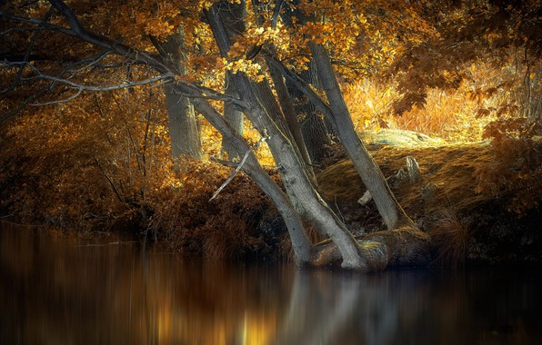 Picture autumn, trees, river
