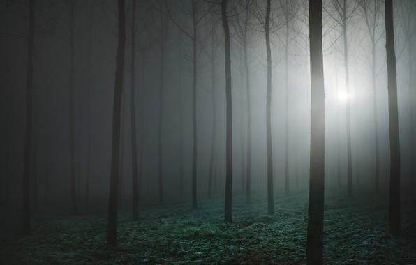 Picture forest, fog, forest, fog, Luke Rebustini
