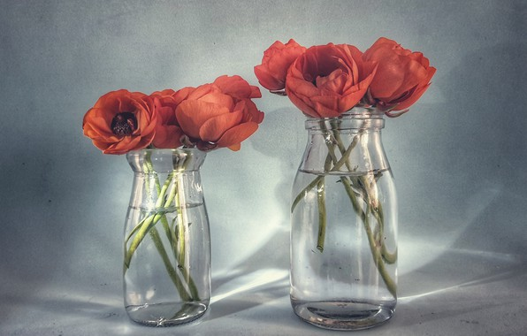 Picture flowers, background, banks