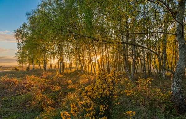 Picture field, autumn, forest, the sky, grass, the sun, clouds, trees, flowers, fog, Park, dawn, England, …