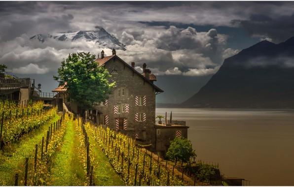 Picture mountains, lake, house, Switzerland, vineyard