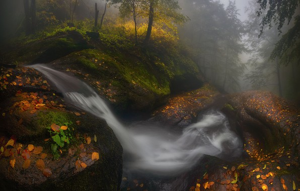 Picture forest, water, trees, nature, Autumn, Bulgaria, Materov.