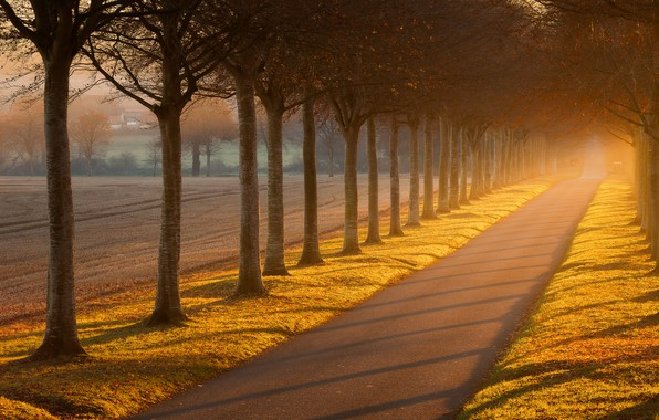 Picture road, field, autumn, light, trees, fog, trunks, alley, the ranks