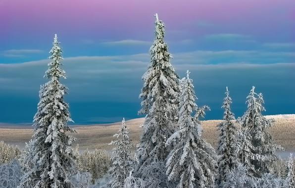 Picture Lapland, Codes, Kumpula