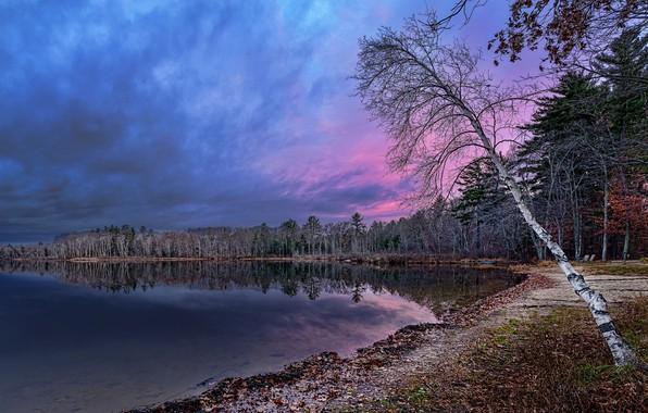 Picture landscape, nature, beauty, the evening, birch