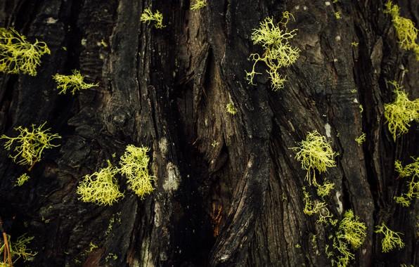 Picture macro, moss, tree bark