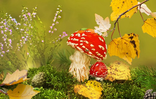 Picture autumn, grass, leaves, macro, nature, mushrooms, moss, branch, Amanita, bumps, bug, Vlad Vladilenoff