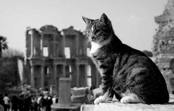 Picture cat, cat, black and white, the ruins, monochrome, Turkey, cat, Ephesus