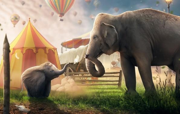 Picture Elephant, Disney, Fantasy, The film, Disney, Circus, Movie, Elephant, Dumbo, Circus, Dumbo, Tent, Balloon, Hosne …