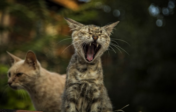 Picture cats, cats wallpapers, Bulgaria, Nessebar, cute cats, Kide fotoart
