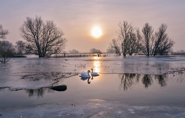 Picture ice, winter, the sky, the sun, light, trees, love, landscape, birds, nature, lake, pond, reflection, …