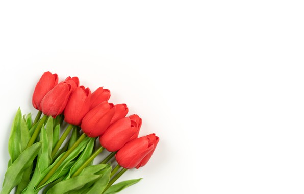 Picture flowers, bouquet, tulips, white background