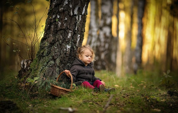 Picture autumn, forest, trees, branches, nature, trunks, basket, girl, needles, birch, baby, child, Radoslaw Dranikowski