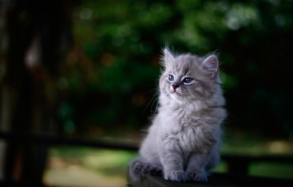 Picture background, portrait, blur, baby, kitty