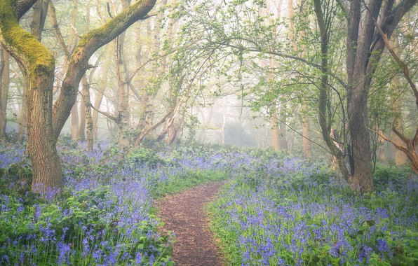 Picture flowers, fog, spring